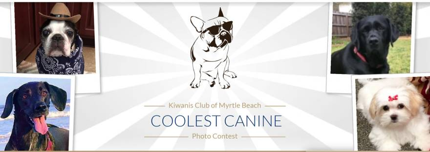 https://www.gogophotocontest.com/mbcoolestcanine